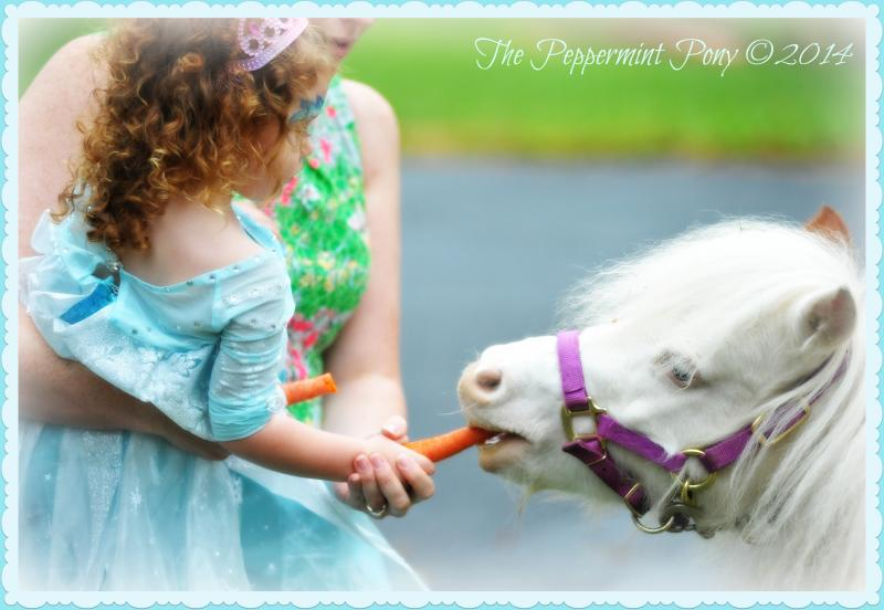 Tiny Elsa clad girl, feeding our mini horse a carrot while being held by her mom